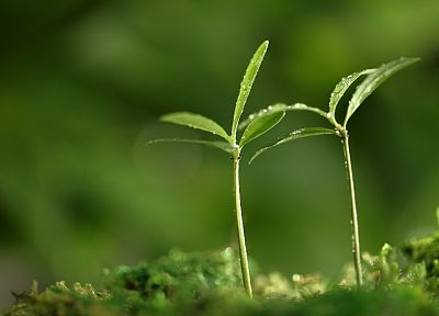 green, nature, plants, macro, depth of field - desktop wallpaper