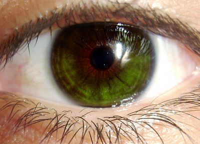 green, close-up, eyes - desktop wallpaper