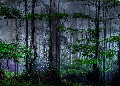 nature, trees, dark, forests, mist - related desktop wallpaper