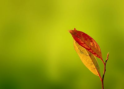 leaves, macro, depth of field - desktop wallpaper