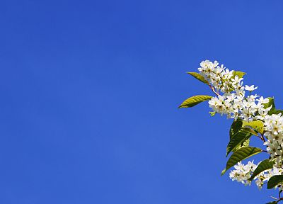 nature - desktop wallpaper