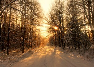 landscapes, nature, snow, trees, sunlight - related desktop wallpaper
