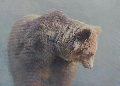 fog, bears, HDR photography, mammals - random desktop wallpaper