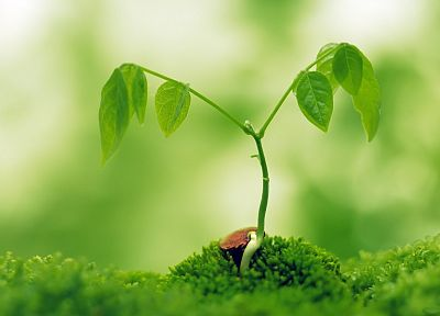 green, nature, plants, macro - desktop wallpaper