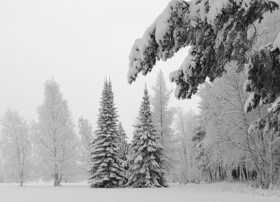 winter, snow, trees - related desktop wallpaper