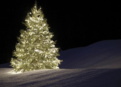 night, Christmas trees, silent - related desktop wallpaper