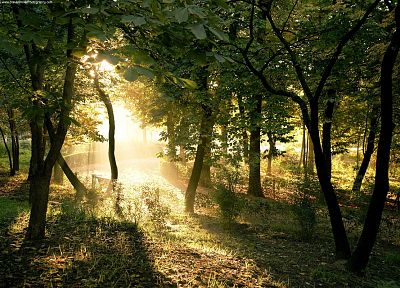 landscapes, nature, trees, forests, sunlight - random desktop wallpaper