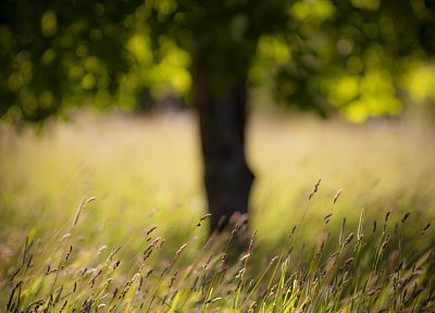 landscapes, nature, grass, summer - desktop wallpaper