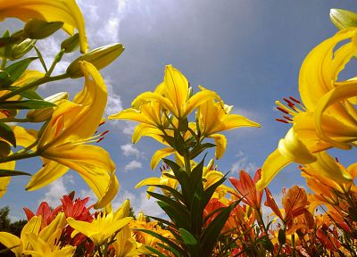 plants, sunlight, yellow flowers, blue skies - desktop wallpaper