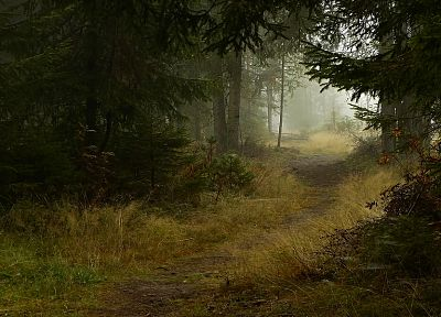 landscapes, nature, forests, paths - related desktop wallpaper
