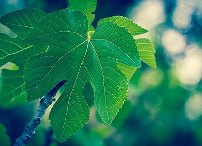 green, blue, nature, leaves, macro - related desktop wallpaper