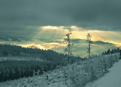 landscapes, nature, winter, forests - desktop wallpaper
