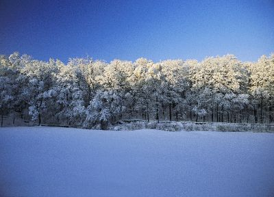 landscapes, snow, trees, forests - desktop wallpaper