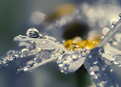 water, close-up, nature, rain, flowers, water drops, macro - random desktop wallpaper