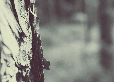 trees, white, forests, bark, depth of field, blurred - related desktop wallpaper