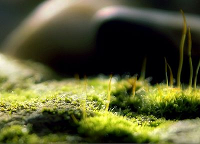 grass, macro, depth of field - related desktop wallpaper