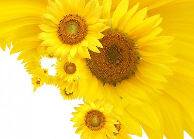 flowers, yellow, yellow flowers - desktop wallpaper