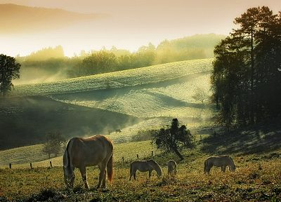 fields, hills, horses - random desktop wallpaper