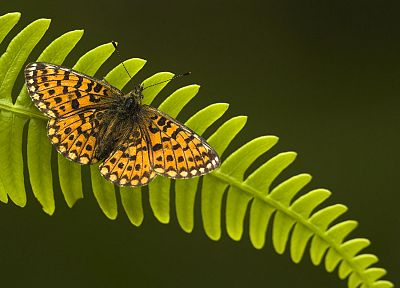 insects, ferns, butterflies - random desktop wallpaper