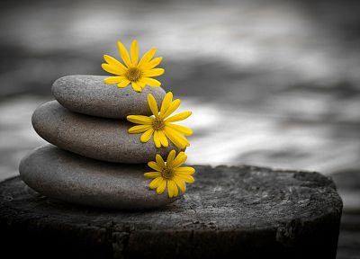 flowers, stones, zen, pebbles, selective coloring - related desktop wallpaper