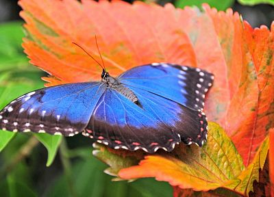 nature, animals, insects, leaves, butterflies - related desktop wallpaper