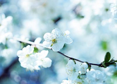 nature, flowers, spring, blossoms, macro, depth of field - related desktop wallpaper