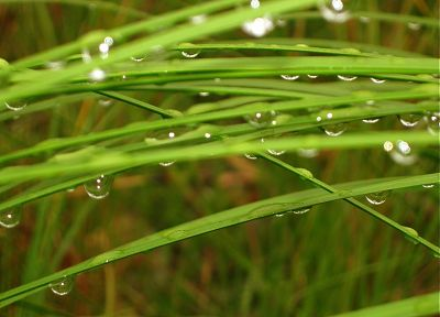 grass, water drops, macro, depth of field - desktop wallpaper