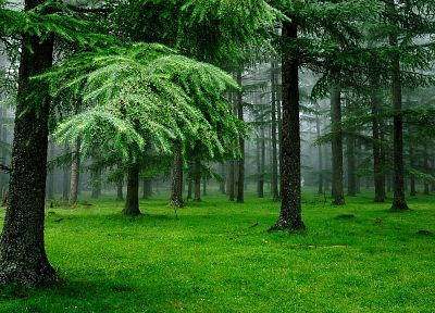 green, trees, forests, grass, outdoors - related desktop wallpaper