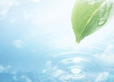 green, nature, leaf, summer, water drops, dreamy - related desktop wallpaper