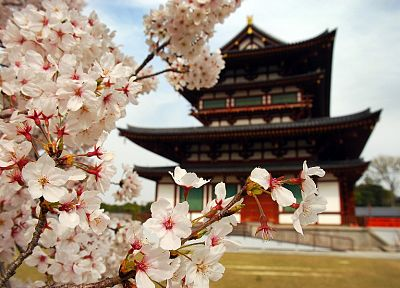 Japan, blossoms, temples, Asia - random desktop wallpaper