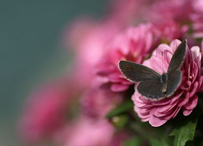 flowers, butterflies - related desktop wallpaper