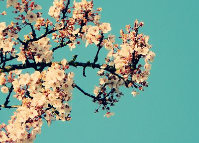 flowers, Magnolia - random desktop wallpaper