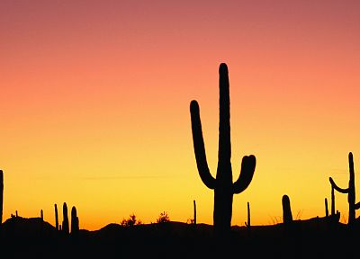 sunset, nature, deserts, silhouettes, cactus - related desktop wallpaper