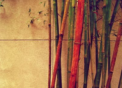 bamboo - related desktop wallpaper