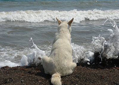 dogs, sea, beaches - random desktop wallpaper