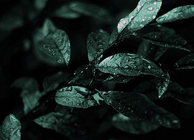 green, leaves, water drops - related desktop wallpaper