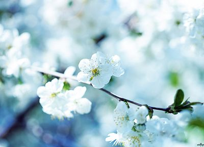 nature, spring, blossoms - newest desktop wallpaper