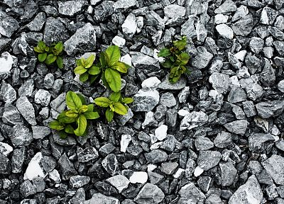 rocks, plants, selective coloring - random desktop wallpaper