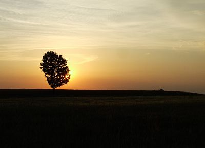 sunset, landscapes, nature, trees, fields - desktop wallpaper