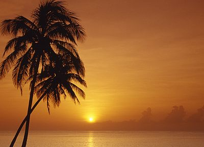 sunset, orange, Cuba, palm trees - desktop wallpaper