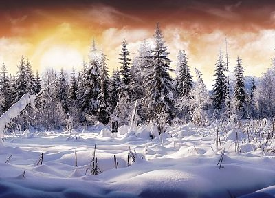 landscapes, winter, snow, trees, snow landscapes - related desktop wallpaper