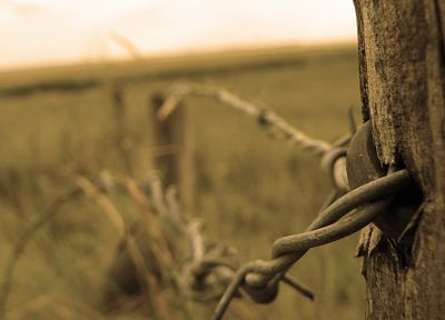 close-up, fences, macro, barbed wire - desktop wallpaper