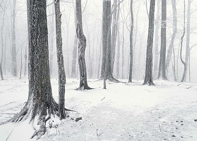 snow, trees, forests, Tennessee - desktop wallpaper