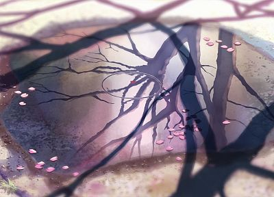cherry blossoms, Makoto Shinkai, 5 Centimeters Per Second, anime, reflections, branches, puddles - random desktop wallpaper