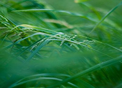 green, close-up, grass, out of focus - desktop wallpaper