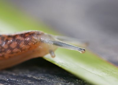 nature, leaf, snails, macro - related desktop wallpaper