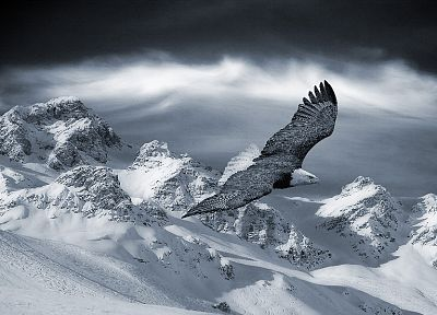mountains, landscapes, winter, snow, birds, eagles - related desktop wallpaper