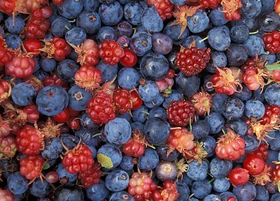 fruits, blueberries - related desktop wallpaper