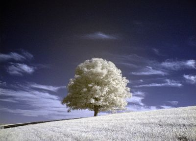 nature, trees, fields, infrared - desktop wallpaper