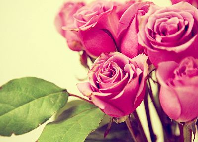nature, flowers, roses - random desktop wallpaper